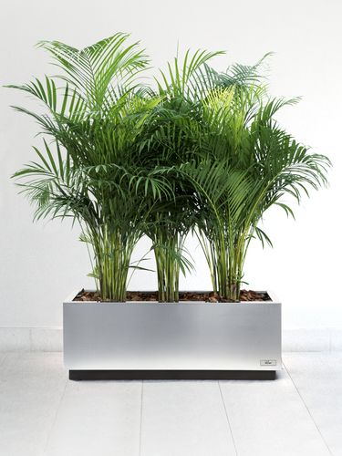 Bac-plante-verte-Metal-Inox-Rectangulaire