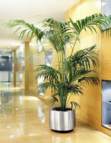 Cosmo-Arsenal-plantes-vertes