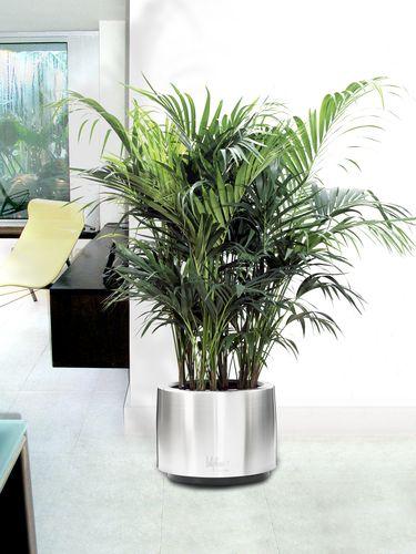Cosmo-Grande-plantes-vertes