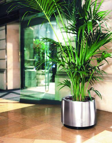 Cosmo-Planta-plantes-vertes