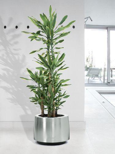 Cosmo-interieur-plantes-vertes