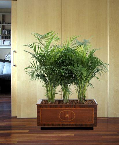 Madera-Cuir-London-plantes-vertes