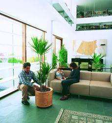 Plantes vertes : Accueil client et aménagement du bureau