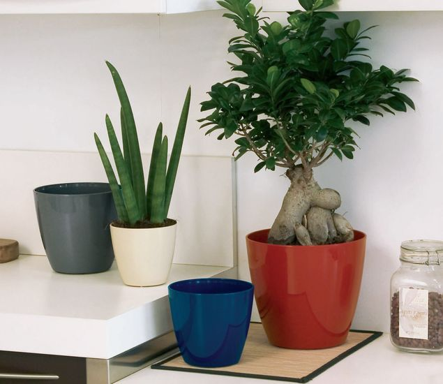 marchioro-bayon1-plantes-vertes
