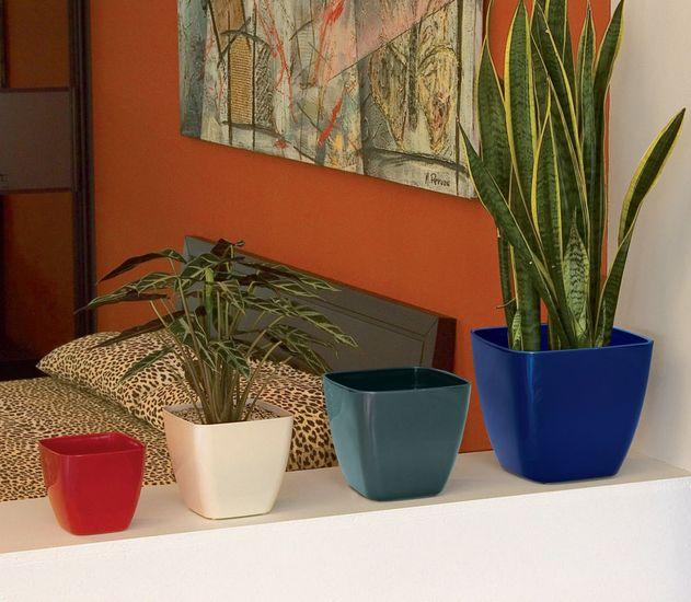 marchioro-ceylan1-plantes-vertes