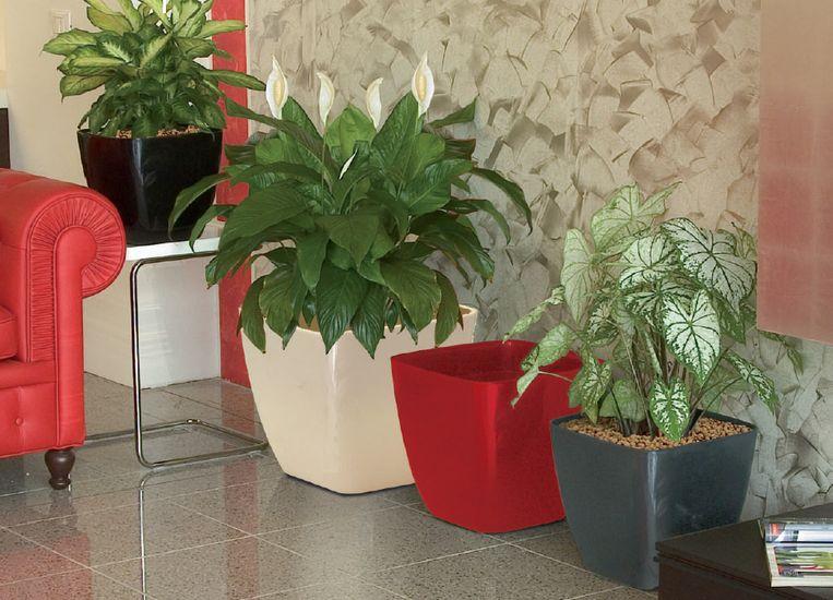 marchioro-ceylan2-plantes-vertes