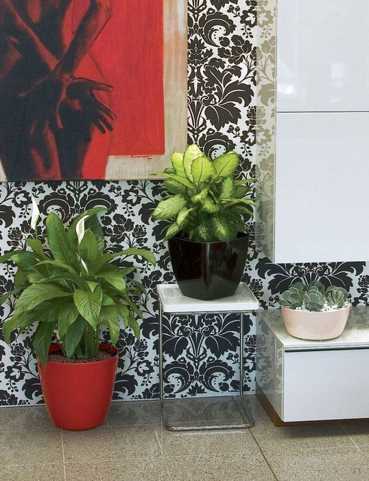 marchioro-kaya2-plantes-vertes