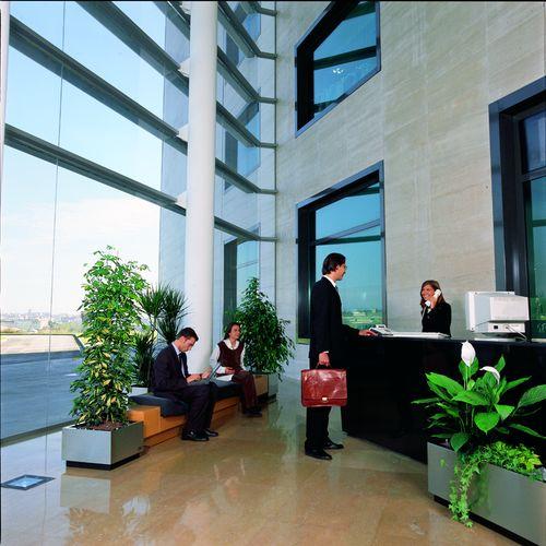 paysagiste-interieur-plantes-vertes