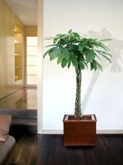 plantes-verte-interieur