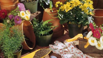 plantes-vertes-interieur-entretien